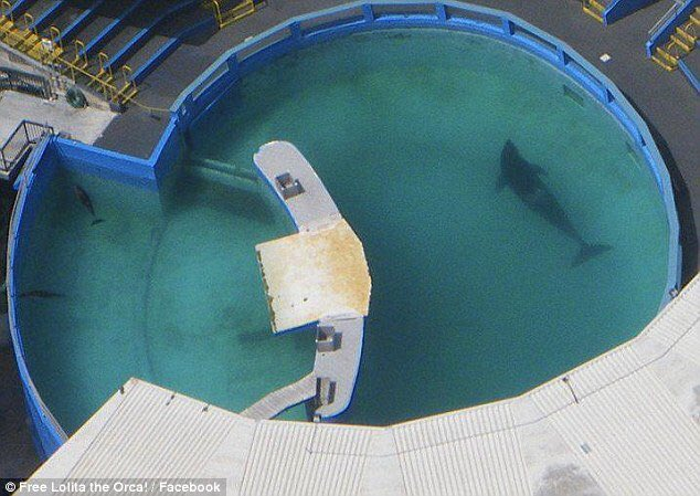 The pool is only four times longer than her body & just 20 feet deep. For 46yrs this has been her cage. #FreeLolita https://t.co/l77HKu1psI