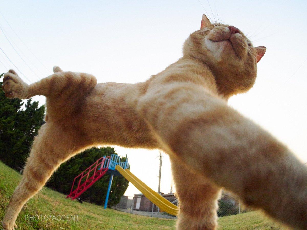 ダイナミックに遊ぶ茶トラwww魚眼レンズ効果で猫ポーズが可愛いwwww