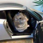 ハムスターがGT-Rに乗っている!?!可愛すぎる画像!
