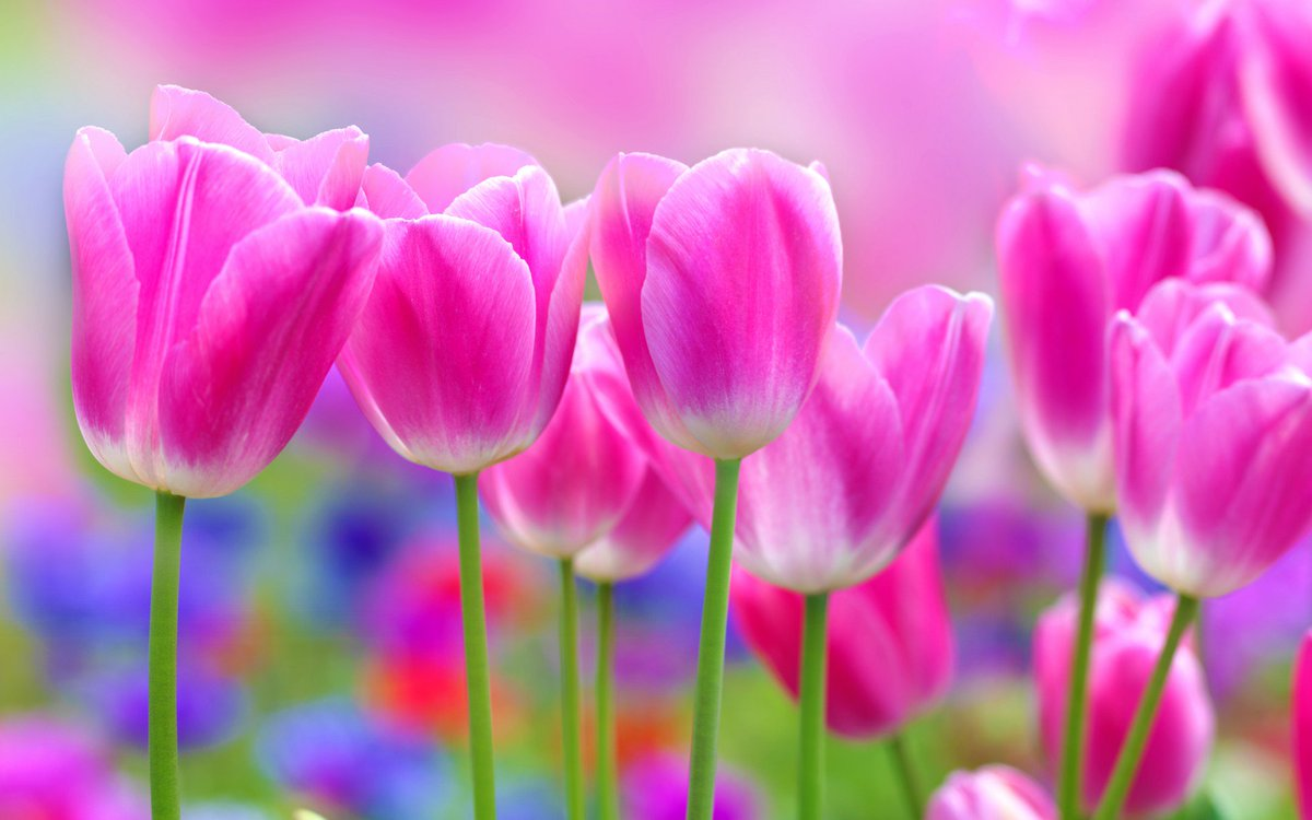 Beautiful Images Of Flowers Wallpapers Image Collections Flower