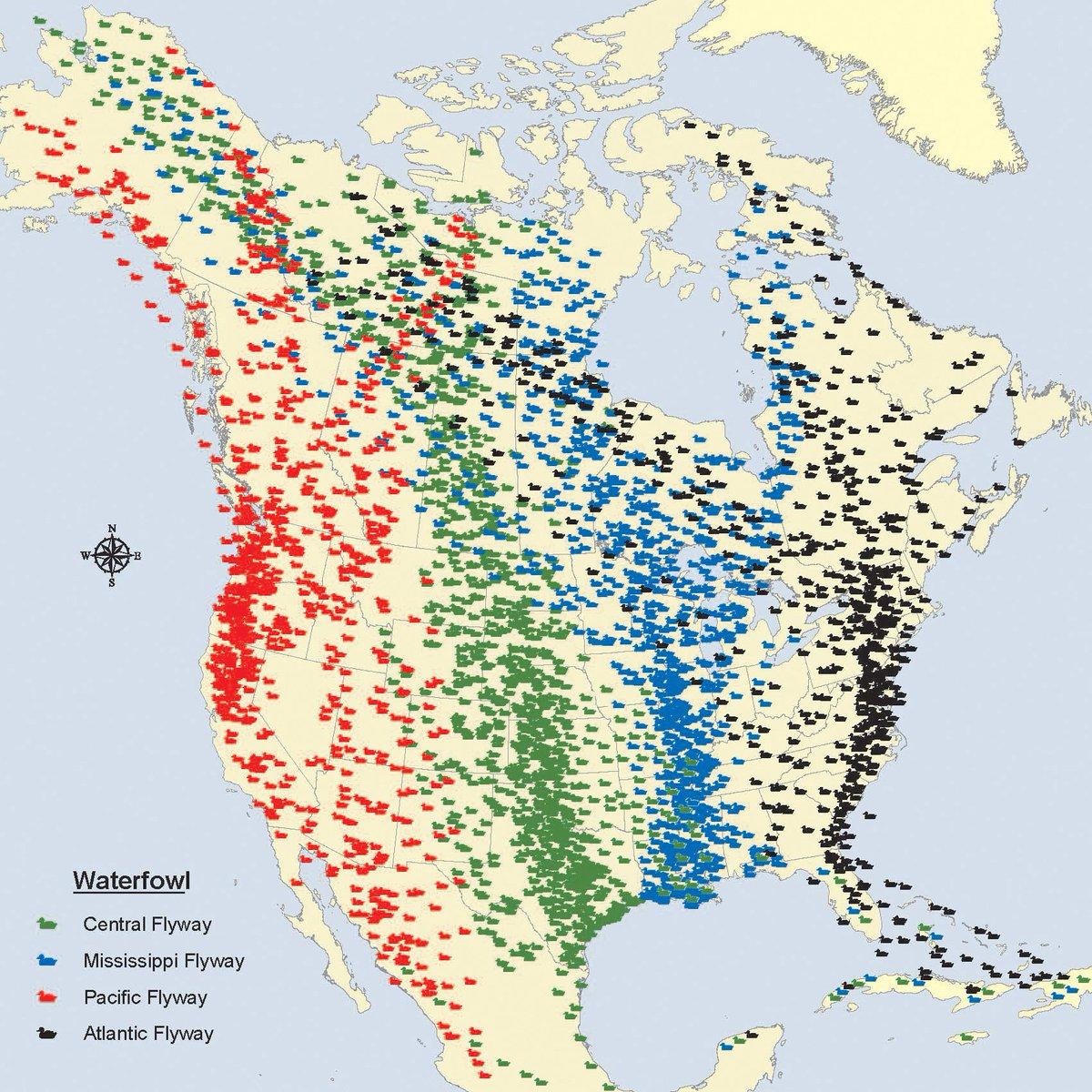 Four migratory bird flyways—what a concept https://t.co/1K53j52ANO #birdyear https://t.co/L9oX1sGJwz