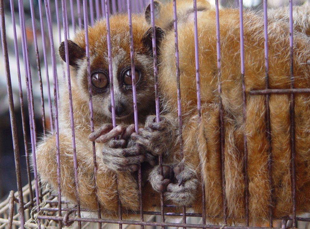 Unsustainable and illegal wildlife trade