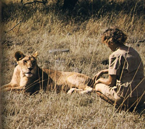 Learn the amazing story of Elsa the Lioness: https://t.co/IhFFJSatYX #WorldLionDay #wildlifewednesday @BFFoundation https://t.co/Yhux5EA0tX