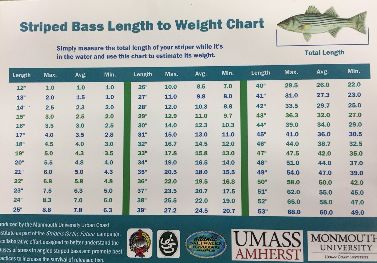 On the water on twitter heres a sizeweight chart for striped on the water on twitter heres a sizeweight chart for striped bass now you can brag and release httpstvfszbipfba nvjuhfo Images