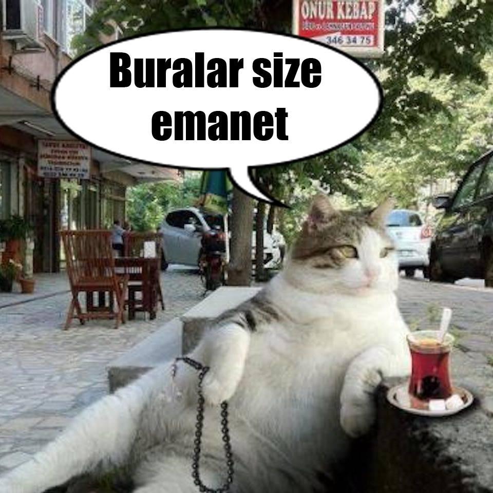 Foto Tombili Si Kucing Meme Meninggal Istanbul Buatkan Patung