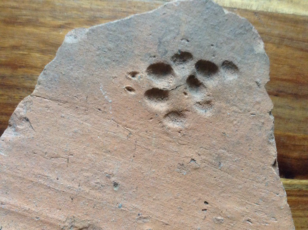 Love the story on this roof tile, where it looks like a dog has been chasing a cat. #animals #hopethecatgotaway https://t.co/BVbXILCSe6