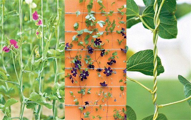 Plant Solutions Plantsolutions Twitter