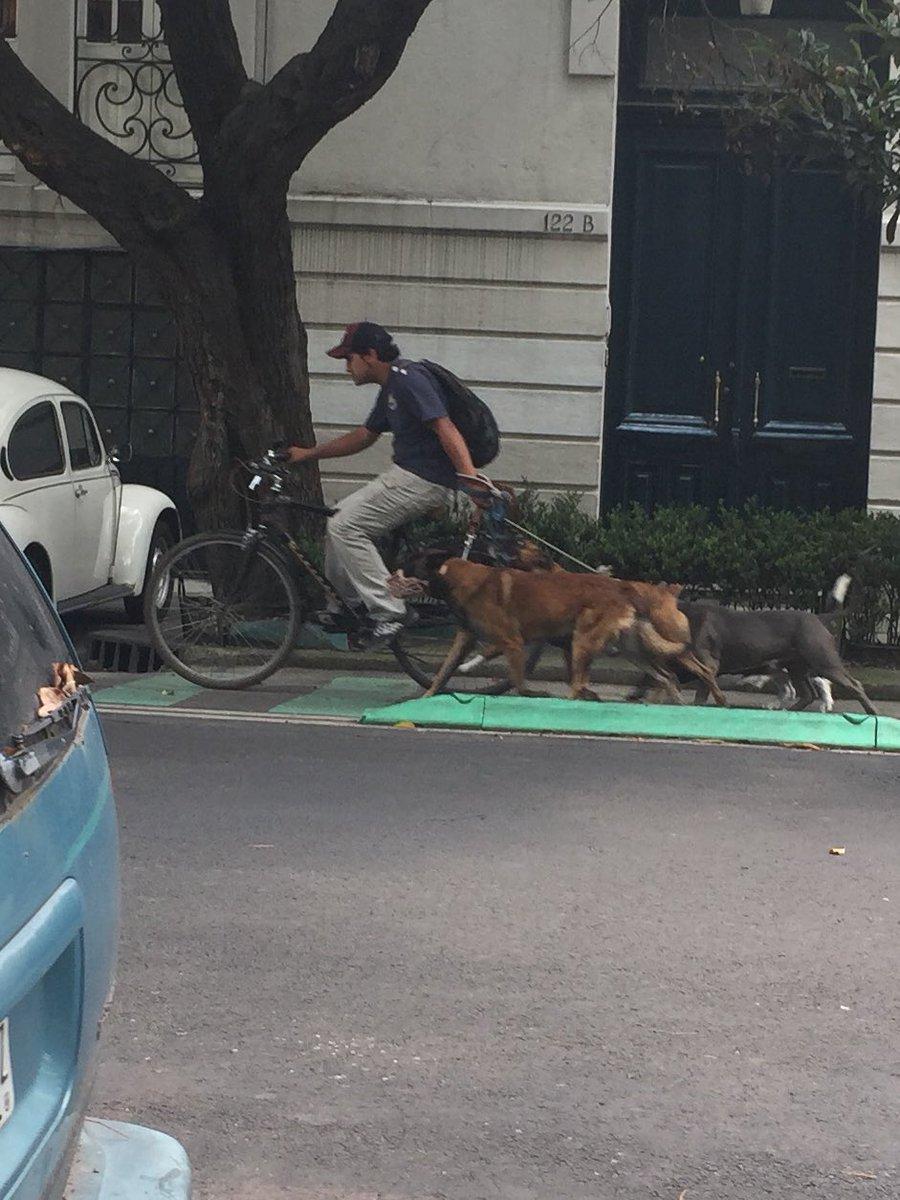 Tache enorme a este paseador de perros en bici de la Roma-Condesa
