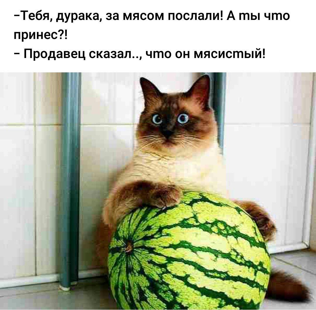 """Россия будет давить """"санкционную"""" еду до 2018 года - Цензор.НЕТ 6095"""