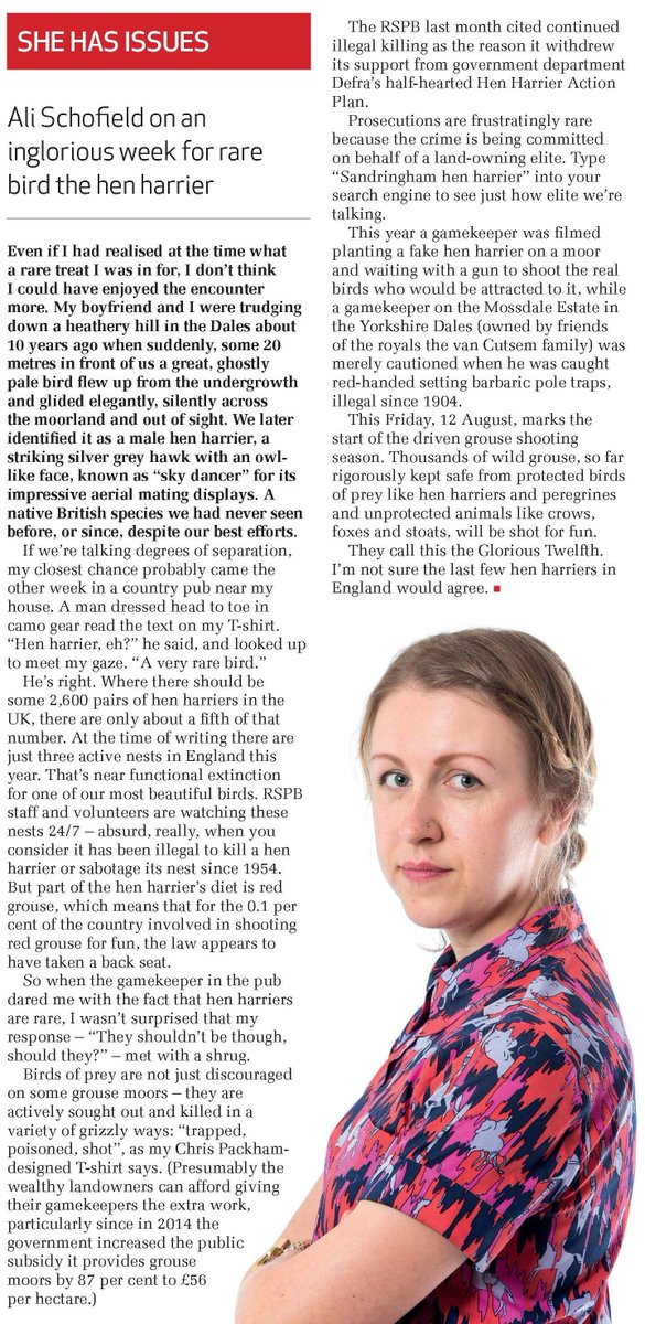 Not such a #GloriousTwelfth for the #HenHerrier says @Ali_Schofield in this week's column  - on sale now https://t.co/bbWUMgj0b6