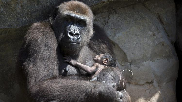 Check out the latest baby animals born at zoos around the world