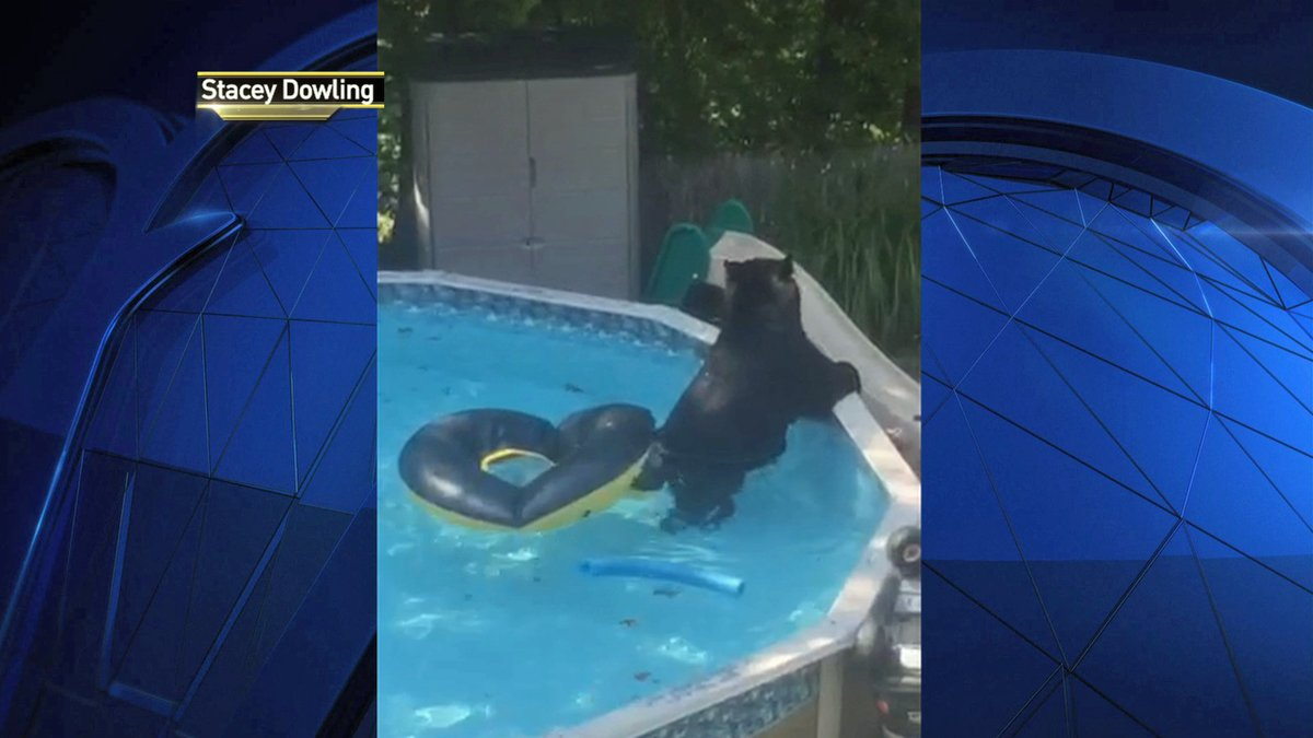 Stunned NJ family watches bear in backyard: