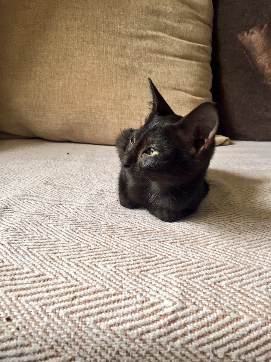Beautiful 1 month old kitten in urgent need of a loving home. Please do get in touch for details. Cheers - plz RT https://t.co/QgjOwDJthQ