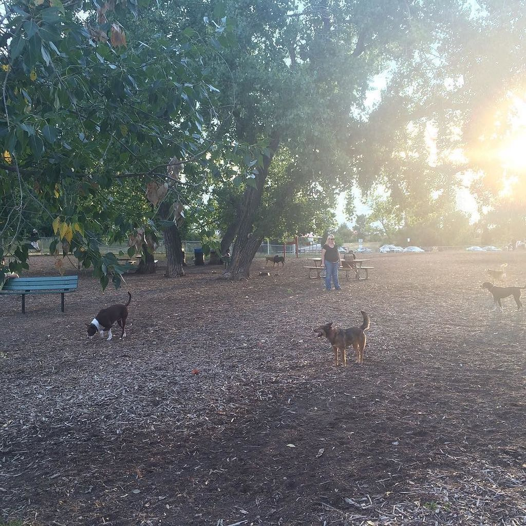 This half-acre fenced-in lot near Belleview Park is one of the top-rated dog parks in the …