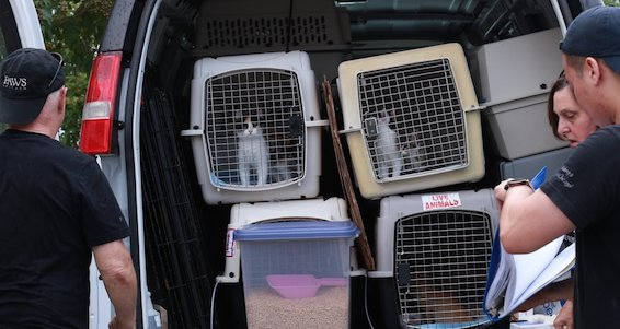 Louisiana shelters overrun by flood-displaced pets; PAWS Chicago brings 26 animals up here.