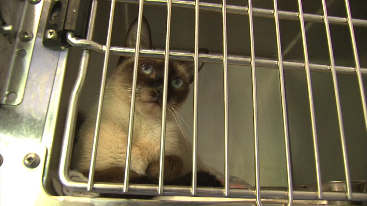 Looking for a new buddy? Cats and dogs rescued from Louisiana flooding arrive in Chicago...