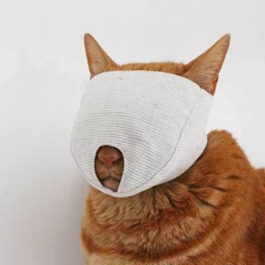[ネコ]猫の爪を切るのに暴れて大変だなーと思って検索してたらマスク売ってた( ゚д゚ )着用した猫の無常感すごい。[2016年8月27日]
