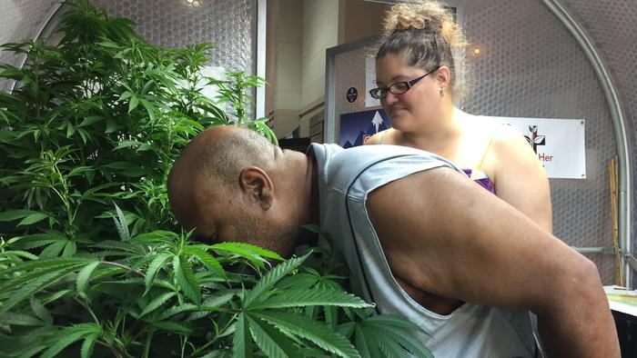 Oregon State Fair generates buzz with first legal display of live marijuana plants in U.S.