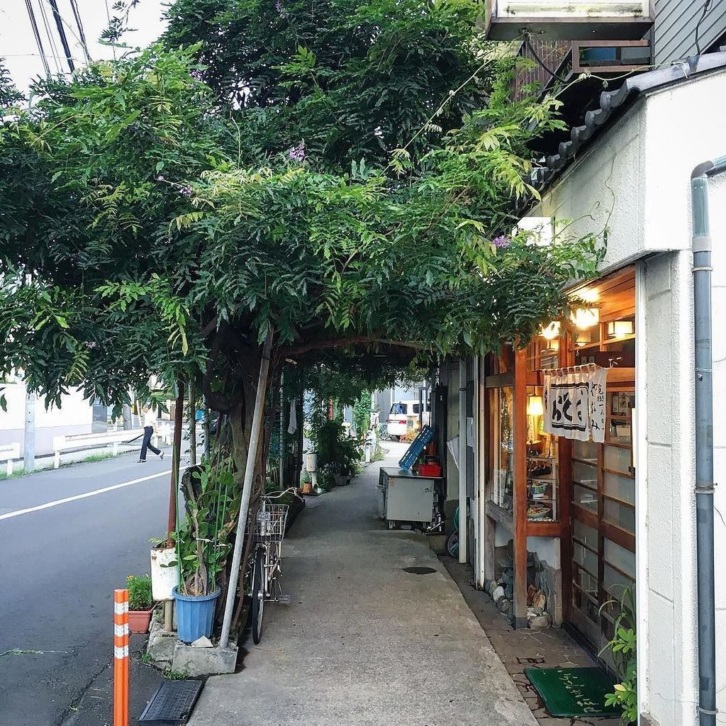 The Abecky Times on Twitter  Natural green canopy. #japan #kanagawa #musashinakahara #canopy #green #street #soba #natu2026 //t.co/5F2OPPclqPu2026   & The Abecky Times on Twitter: