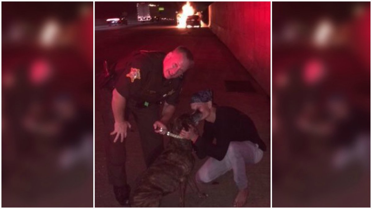 Indiana sheriff's officer rescues dog from burning car