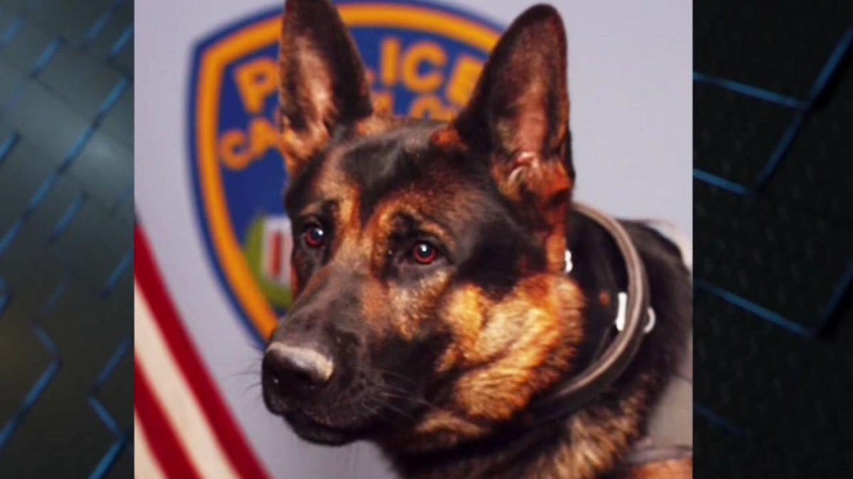 Man convicted of shooting & killing a police K-9 was sentenced to 45 years in prison.
