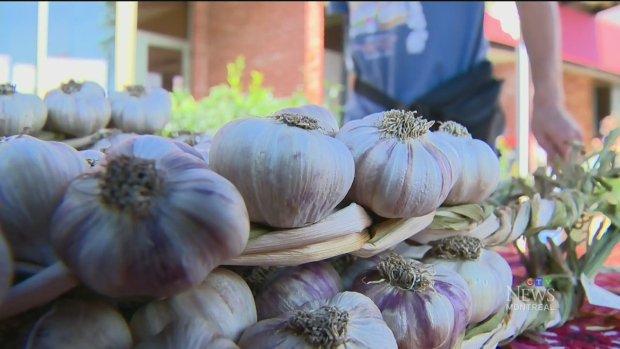 Quebec garlic farmers hold annual festival
