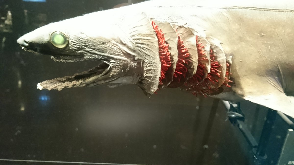 映画「シン・ゴジラ」を観ました。シンゴジラ第2形態のベースがラブカだったとは… pic.twitter.com/DwUwmknmAe