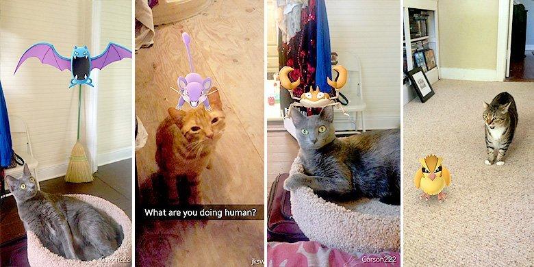 Unimpressed Cats vs 'Pokémon Go'—When 'Gotta Catch 'Em All' Means Your Cat Too :D https://t.co/cCa93lStg1 https://t.co/Am78wnMShn