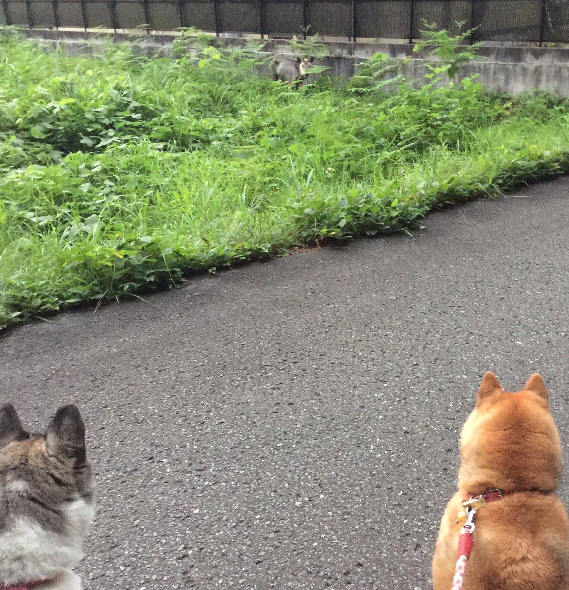 カモシカさん こんにちは! pic.twitter.com/1gaGUVRRHN