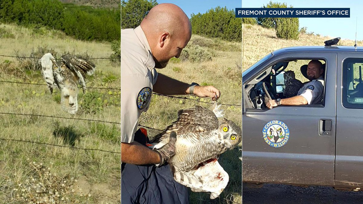 This owl is not having a hoot, but a Colorado wildlife officer was able to help out.