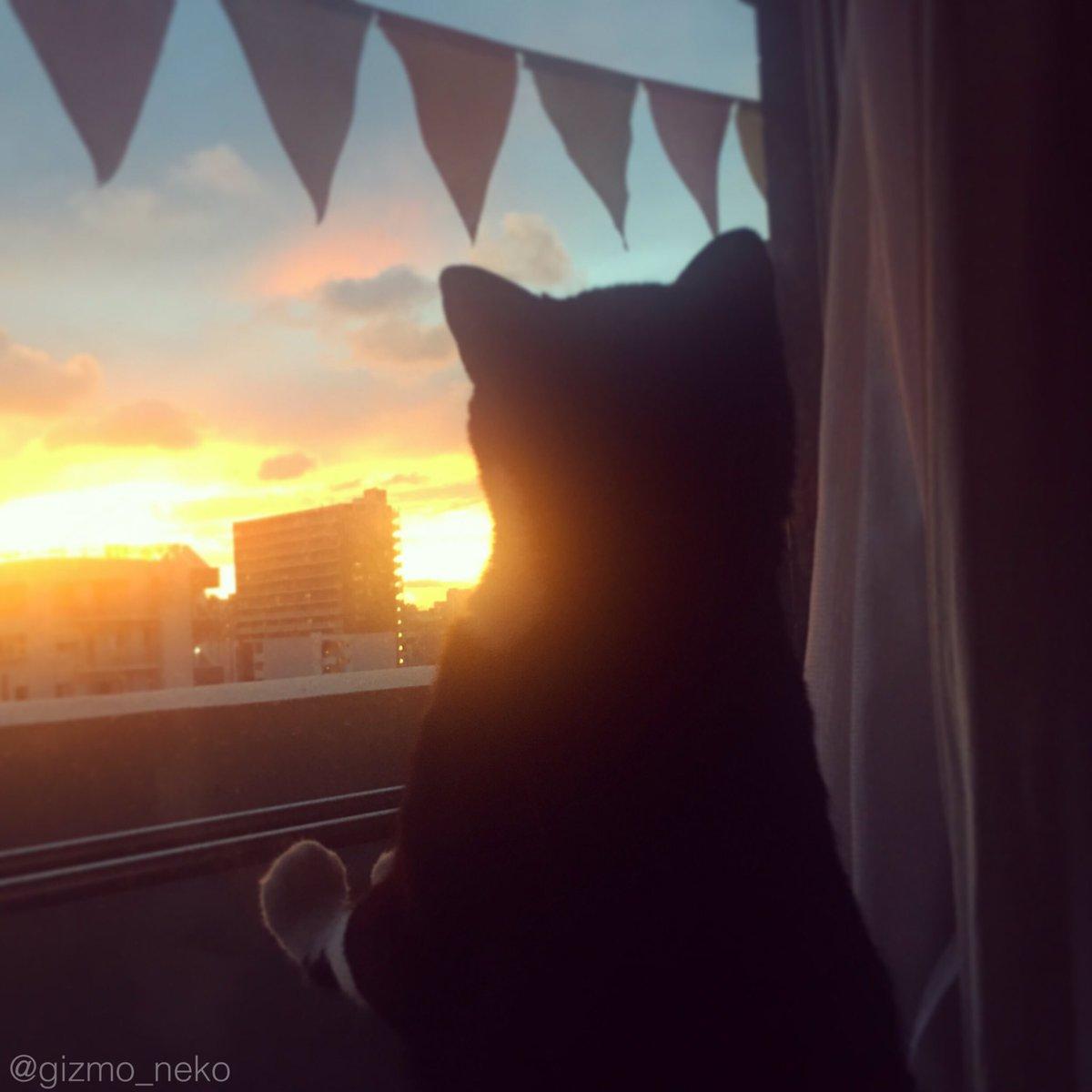 夕焼けが綺麗な日はやたら外を眺めたがるんだけど、何なの?ロマンチストなの? pic.twitter.com/XYWHNmPoAs