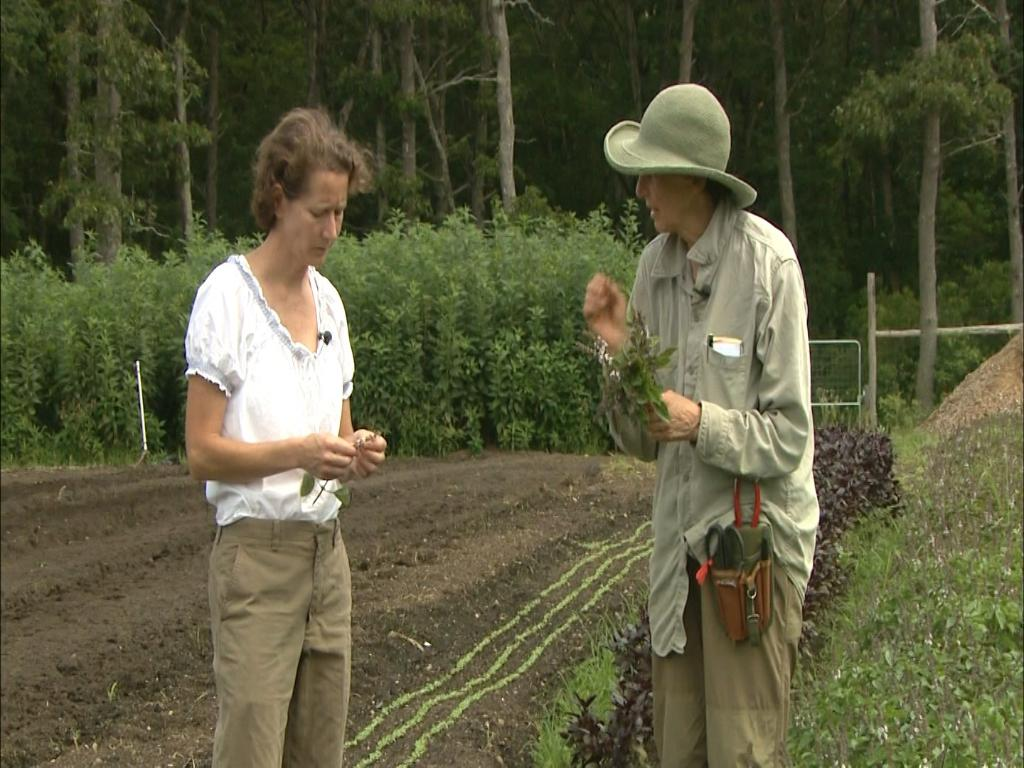 @Chronicle5 visits a fruit farm with 70 varieties of tomatoes & meets a self-professed tomato snob. 4:30am WCVB