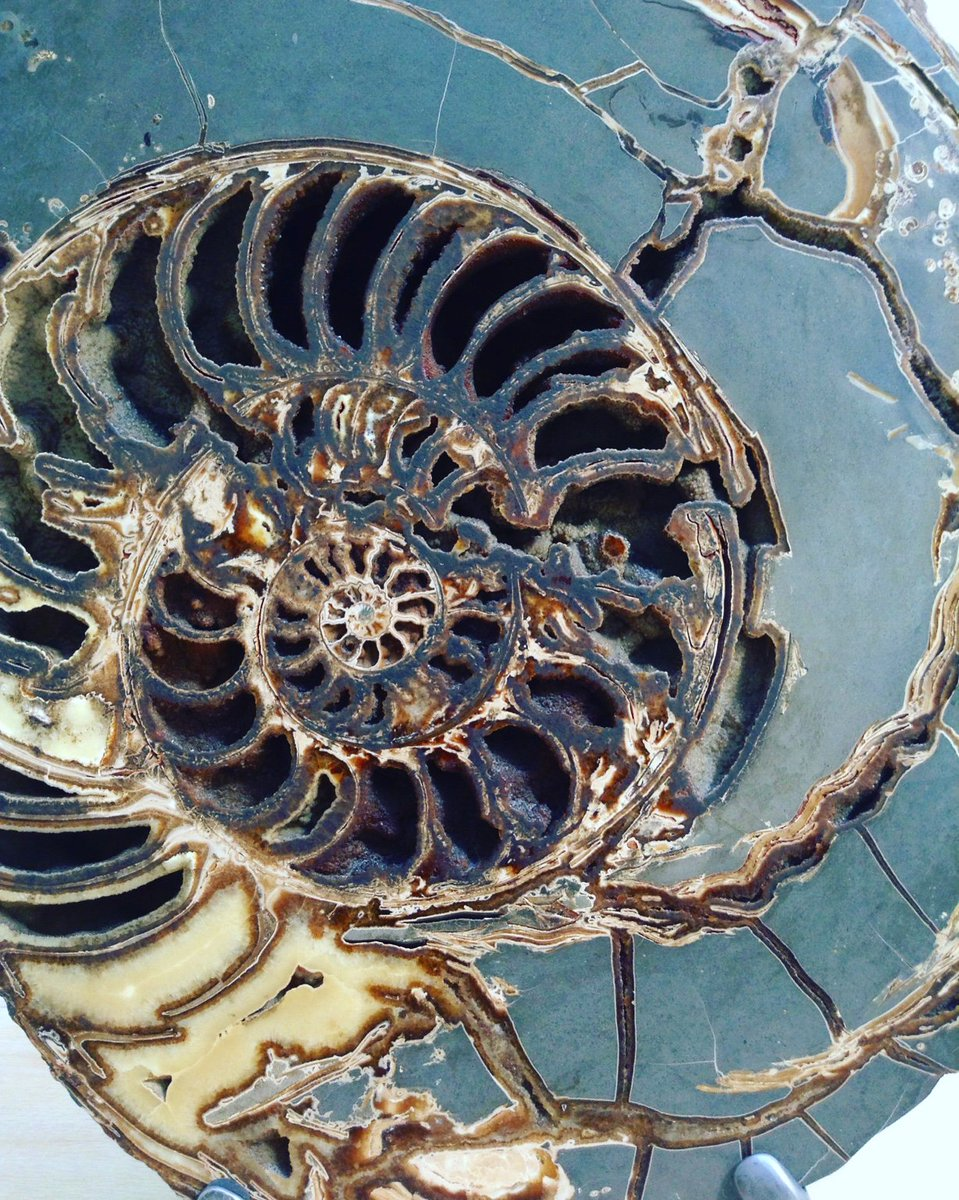 Ammonite, in the @NHM_London. https://t.co/6Eh9RxcgsD