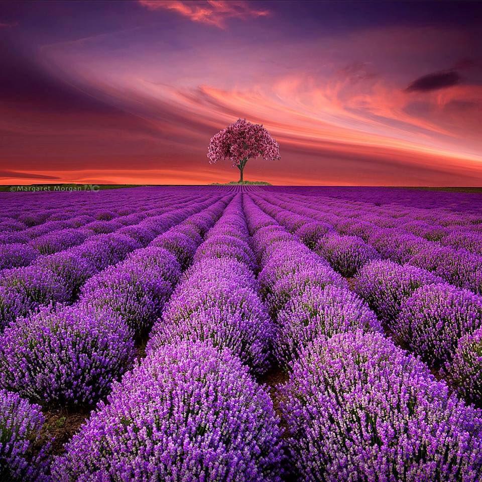 La vie est une valeur absolue... Certains en défendent le sens... d'autres en oublient la signification...