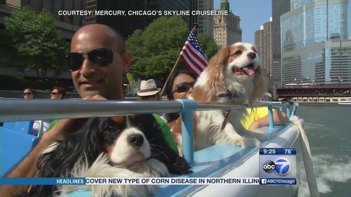 Take a canine cruise through Chicago