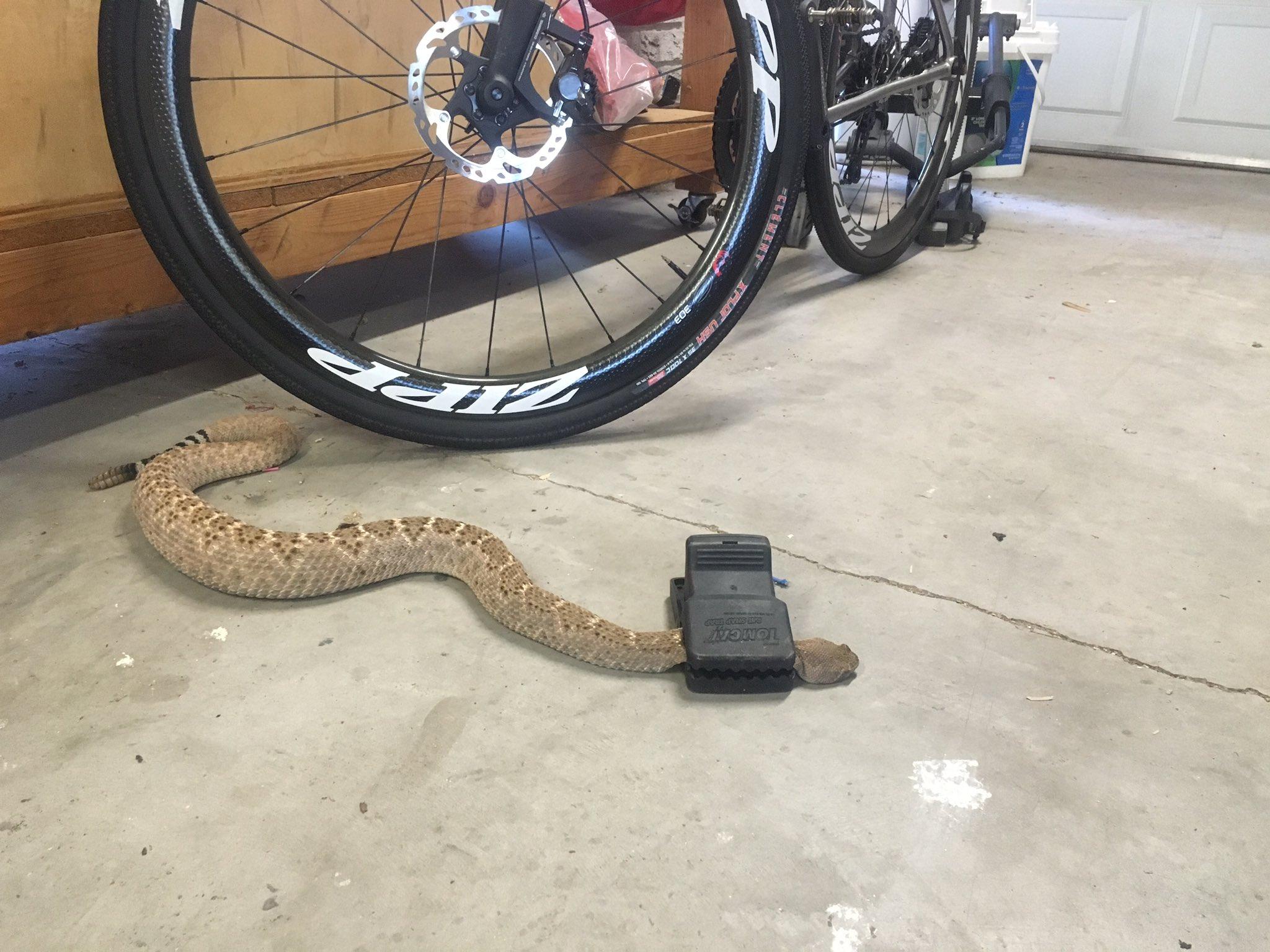 Seton Claggett On Twitter Quot I Have Rat Traps In My Garage