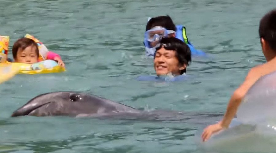 Sad: children swim in soon-to-be-bloodied water with #Taiji dolphins https://t.co/NENl1XJBe6 https://t.co/dyeZGm4Uin