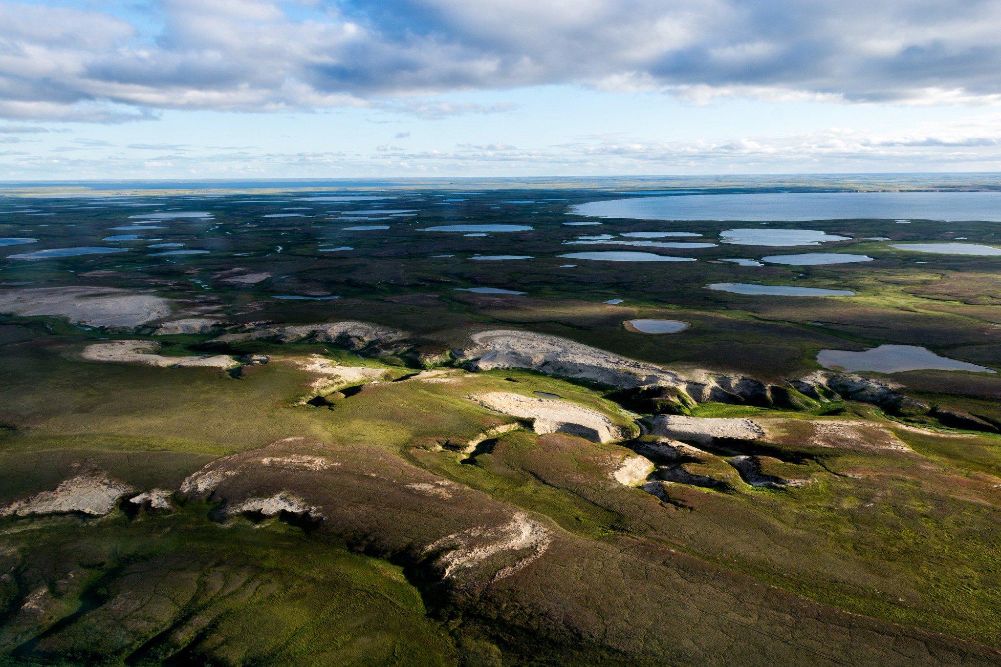 картинки полуострова ямал вывели морозостойкие сорта