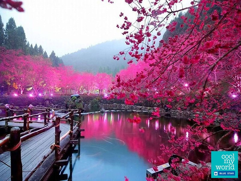 #Nishinomaru garden, #Japan has over 600 cherry trees and a scenery that changes every season. #UnrealDestinations.pic.twitter.com/ZfEWjcPgyg
