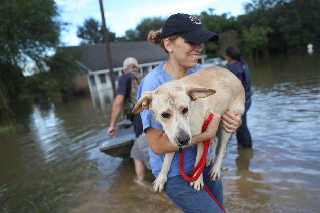 Rescuers Save Hundreds Of Animals Following #LouisianaFlood. #peoplehelpingdogs https://t.co/BjDyiT6191 https://t.co/ZZbkjb0KIm