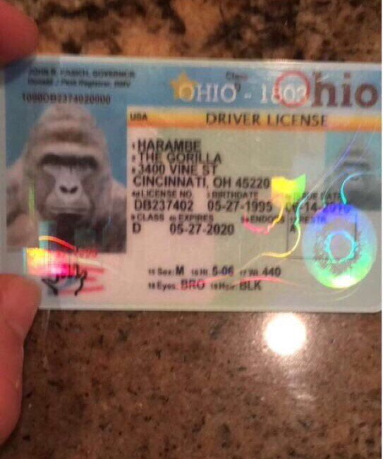 Using a fake ID at the bars. #TFM