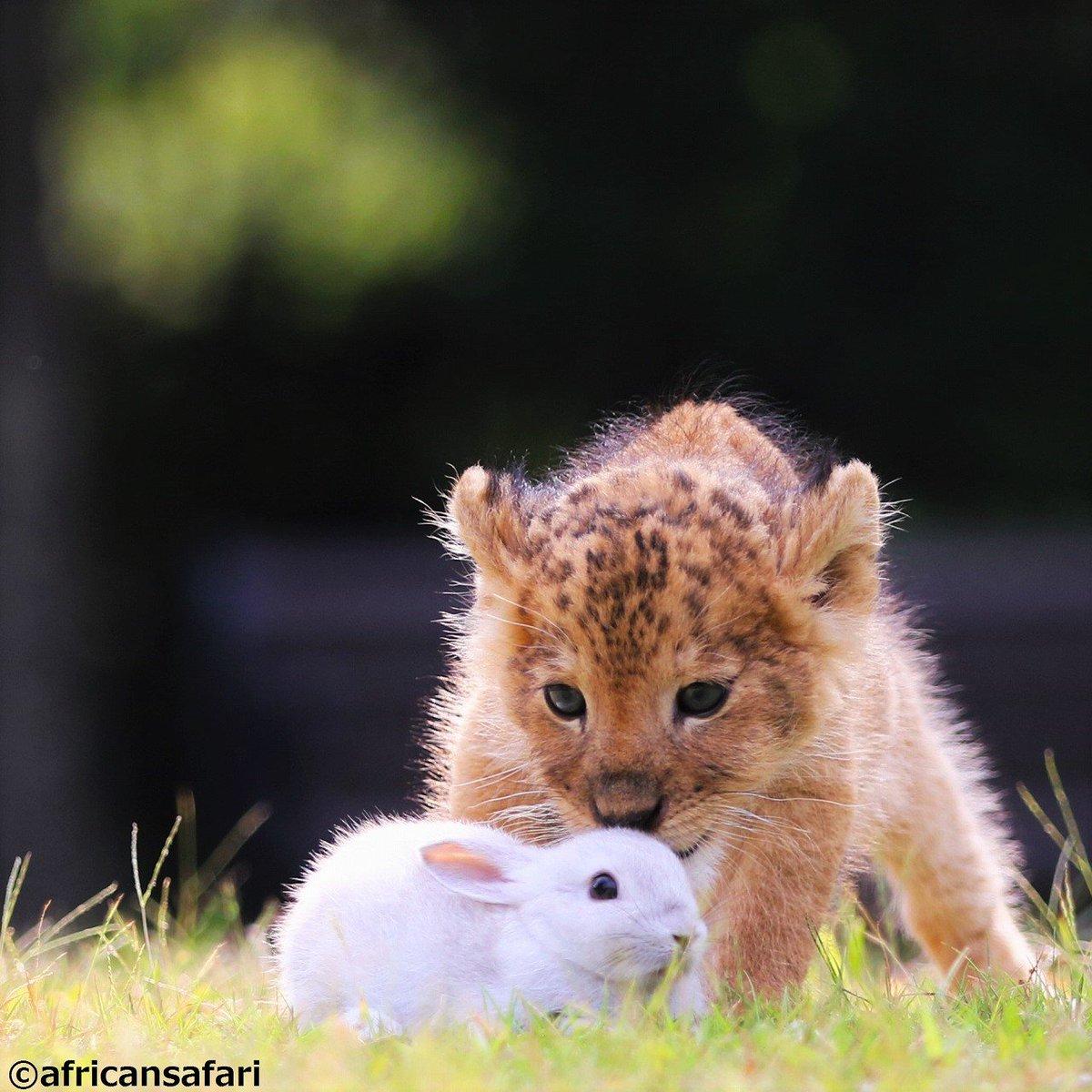 仔トラと仔ライオンまとめ