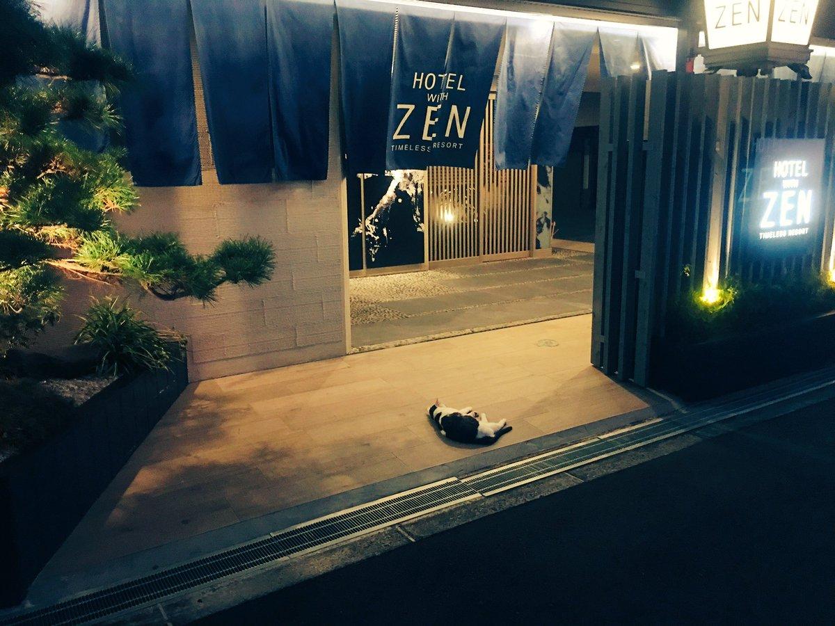 [ネコ]ホテルに連れ込もうとして直前でフラれたであろうネコがいる。[2016年8月20日]