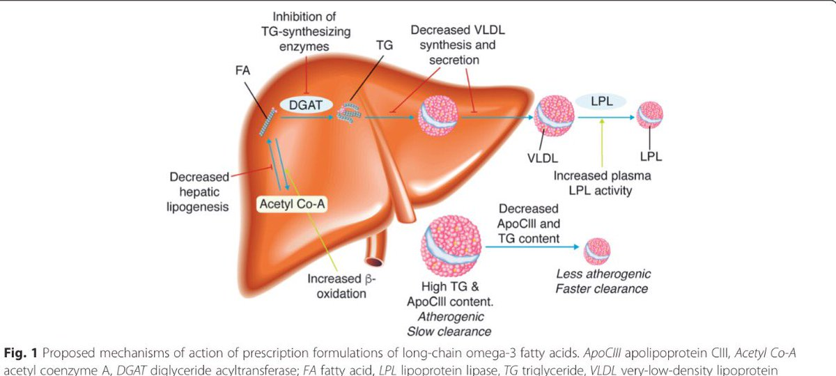 clinical relevance of omega-3 fatty acids in mgmt of #hypertriglyceridemia https://t.co/Zu7KFtcNuK # @nationallipid https://t.co/jTVJ7fQMp7