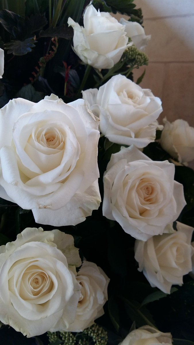 Kriii Visitor Centre On Twitter These Beautiful White Roses Have