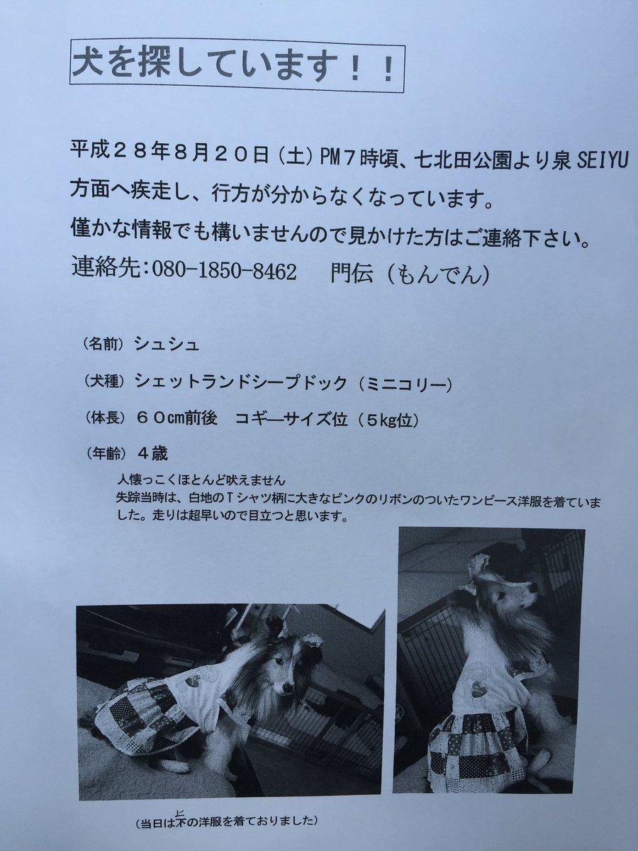 【公式RTお願いします‼︎】【迷子の犬を探している方がいます】仙台 七北田付近 今子どもと歩いていたらこのチラシを配ってワンちゃんを探している女性がいました。昨日の花火大会の時に迷子になったそうです。 https://t.co/S4VvAYlAUn