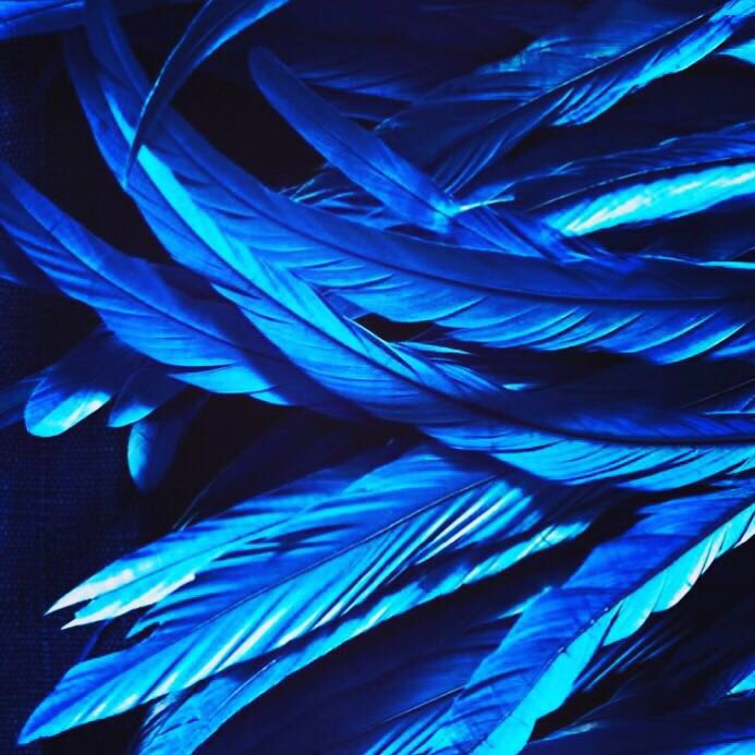 A bunch of Mccreedyblue hand painted feathers, that will now be put inside an original Mccreedyblue coffee table. https://t.co/UIGWYjzgmz