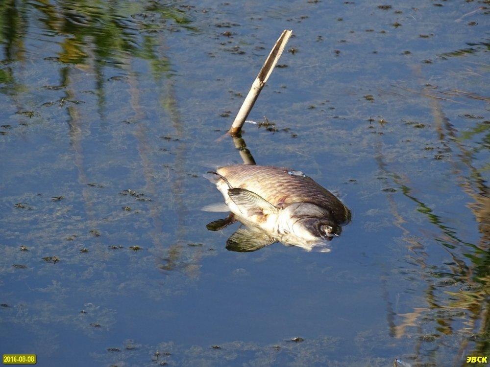 рыбалка на кочетах краснодарский край