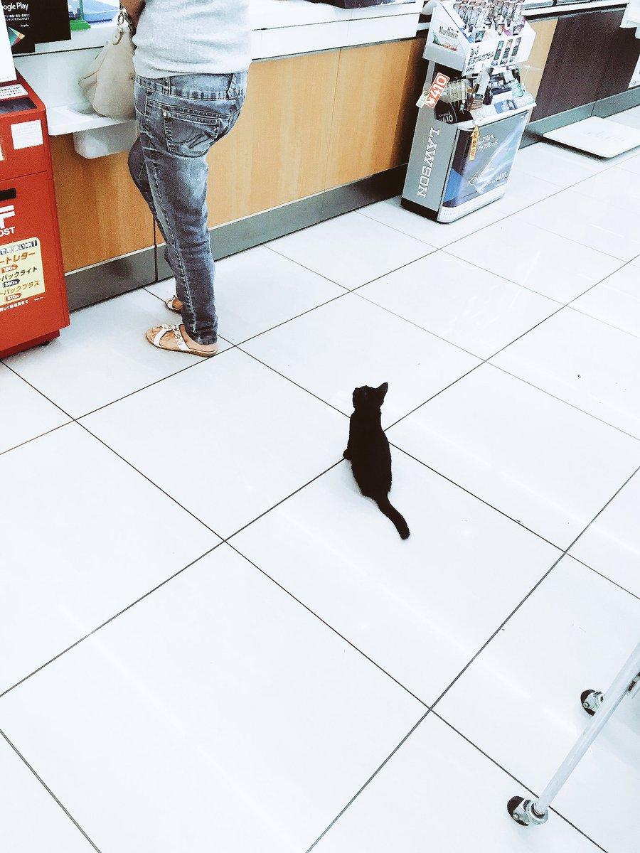 [ネコ]お会計しようと思ってレジに行ったら、わたしの前のお客様さんが子猫でした。おつかい頼まれたのかな。[2016年8月21日]