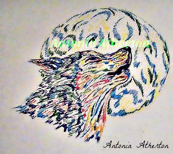 Antonia Atherton On Twitter My Abstract Wolf Drawing